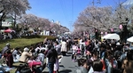 140405 桜まつり.JPG