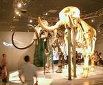 140811 古哺乳類16アフリカ&マンモス.JPG