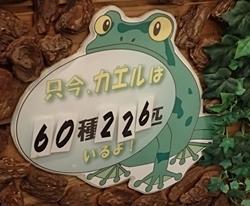 151102 あわしまマリン_カエル館3 60種.JPG