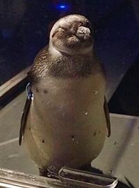 151114 すみ水ペンギンたいこ.JPG