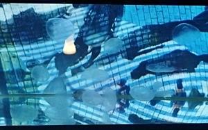 151114 すみ水TADay クラゲ蜷川展示.JPG