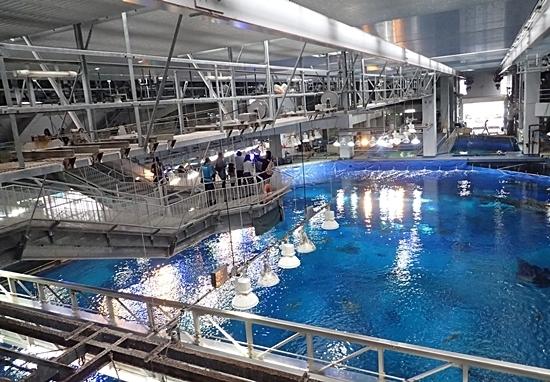 160111美ら海水族館 上から見学.JPG