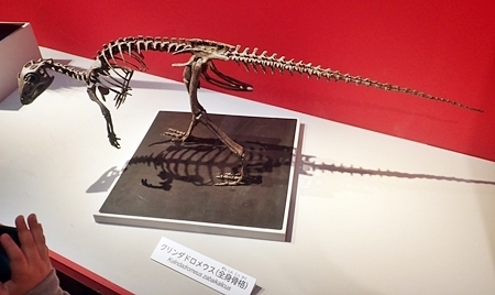 160404 科博_恐竜博 クリンダドロメウス骨.JPG
