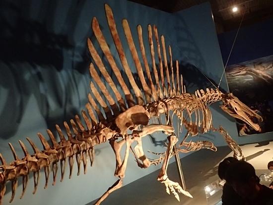 160404 科博_恐竜博 スピノ3.JPG