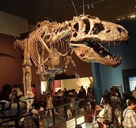 160404 科博_恐竜博 ティラノ3.JPG