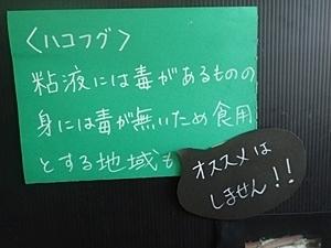 160514東大五月祭_水族館ハコフグ説明.JPG
