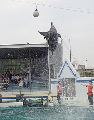 160626 しながわ水族館_イルカショー.JPG
