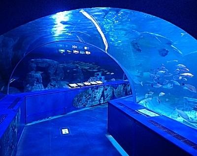 160626 しながわ水族館_トンネル水槽.JPG