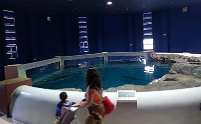 160710 おたる水族館 03 ほのぼのプール.JPG
