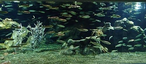 160710 おたる水族館 06 冷たい海.JPG