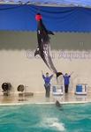 160710 おたる水族館 11 イルカショー.JPG