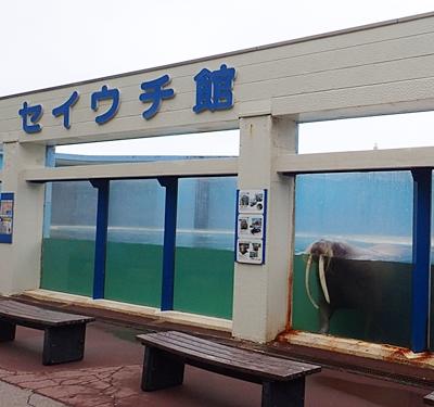 160710 おたる水族館 12 海獣公園セイウチ館.JPG