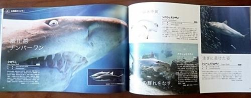 160715 海のハンター展 (32)図録サメ.JPG
