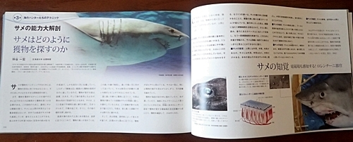 160715 海のハンター展 (33)図録サメ解説.JPG