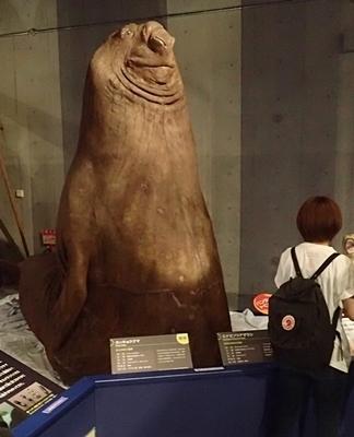 160715 海のハンター展 (6)ミナミゾウアザラシ.JPG