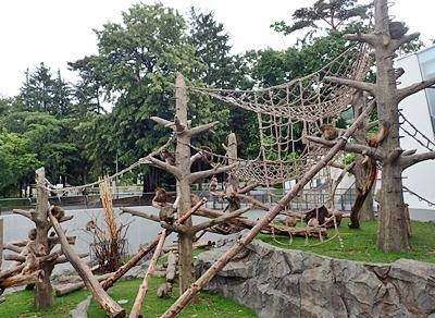 160716 円山動物園 ニホンザル_サル山.JPG