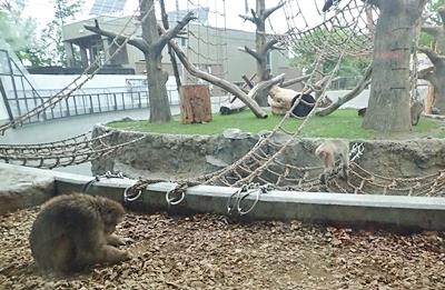 160716 円山動物園 ニホンザル_内側から.JPG