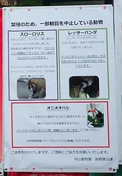 160716 円山動物園 展示中止1.JPG