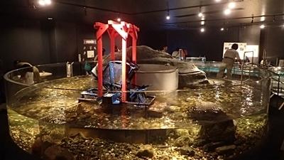 160726 千歳水族館07 円形流水水槽.JPG