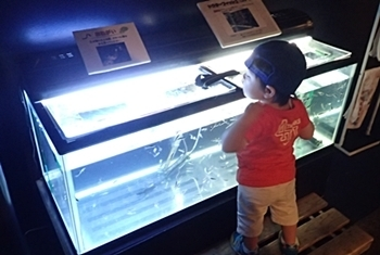 160726 千歳水族館09 ガラルファ.JPG