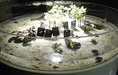 160726 千歳水族館11 世界の淡水魚_砂地.JPG
