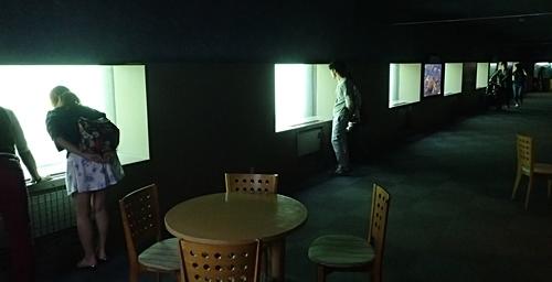 160726 千歳水族館12 水中観察ゾーン.JPG