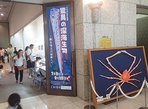160911千葉県中央博物館驚異の深海生物 2 展示室.JPG