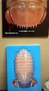 160911千葉県中央博物館驚異の深海生物 テイオウグソクムシpanel.JPG