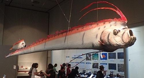 160911千葉県中央博物館驚異の深海生物 リュウグウノツカイ.JPG