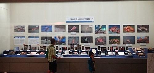 160911千葉県中央博物館驚異の深海生物 甲殻類.JPG