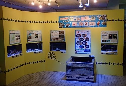 161104 碧南海浜水族館_入口近くちびっこ魚展示.JPG