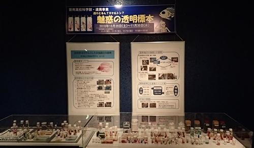161104 碧南海浜水族館_透明標本.JPG