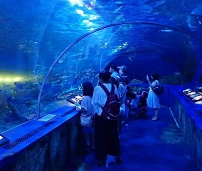 170109 しながわ水族館.JPG