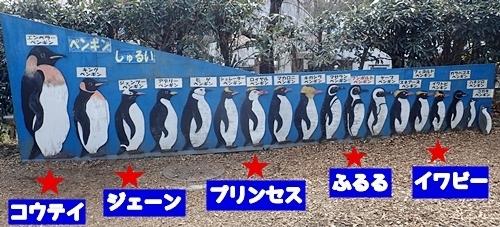 170312 羽村市動物公園 ペンギン一覧.JPG