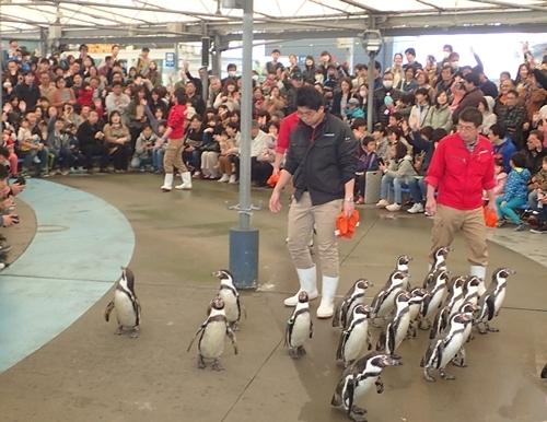 1703 鳥羽水族館461_ペンギン散歩.JPG