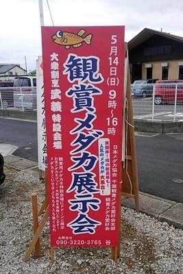 1705メダカ品評会 0.JPG