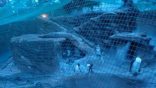 170818東山動物園ナイト05ペンギン舎.JPG