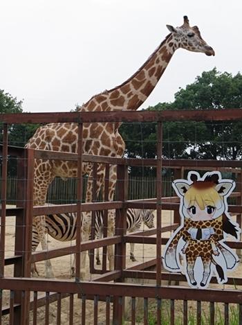 1708東武動物公園-キリン_けもフレ看板.JPG