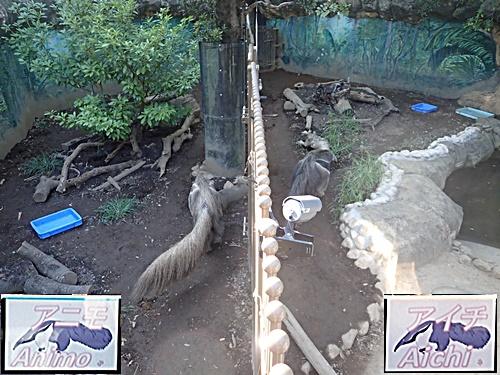 1709江戸川区自然動物園 01オオアリクイ.JPG