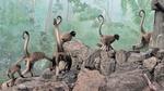1709江戸川区自然動物園 21ブラウンケナガクモザル.JPG