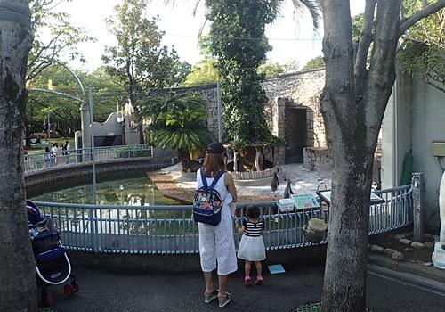 1709江戸川区自然動物園 30フンボルトペンギン舎.JPG