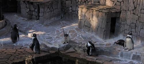 1709江戸川区自然動物園 31フンボルトペンギン_.JPG