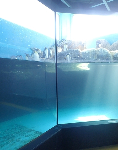 1803箱根園水族館 (12)ペンギン3種展示.JPG