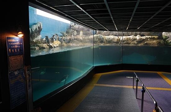 1803箱根園水族館 (2)キング・ジェンツー・マカロニペンギン展示.JPG