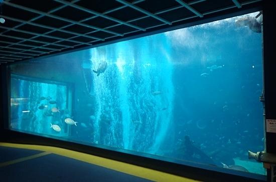 1803箱根園水族館 (3)大水槽.JPG