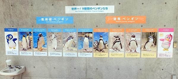 180722長崎ペンギン水族館10ペンギン一覧.JPG