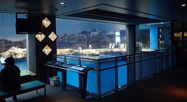 180722長崎ペンギン水族館10亜南極ペンギンプール.JPG