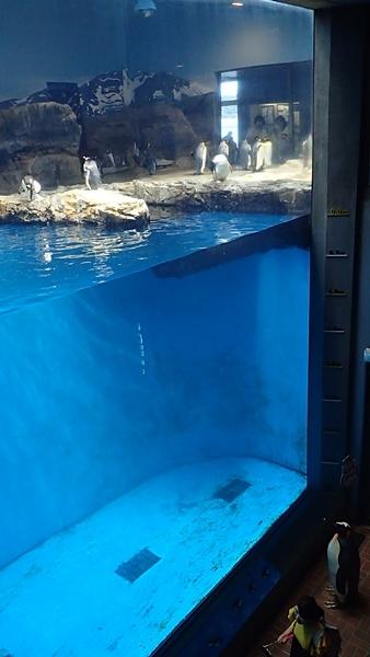 180722長崎ペンギン水族館10亜南極ペンギンプール吹き抜け.JPG