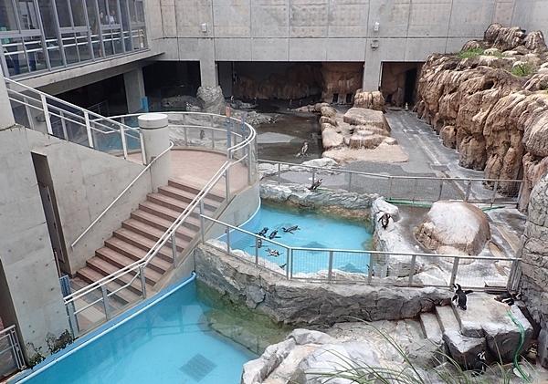 180722長崎ペンギン水族館51温帯ペンギン.JPG