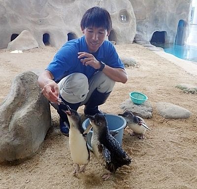 180722長崎ペンギン水族館55コガタペンギンお食事.JPG